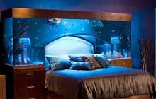 卧室鱼缸这样放,梦到自己落水了!